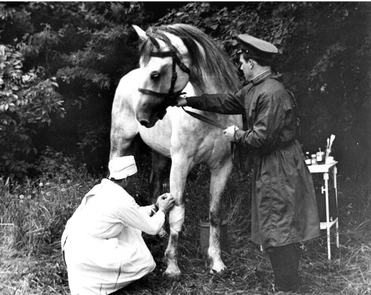 Оказание ветеринарной помощи в ветеринарном лазарете...
