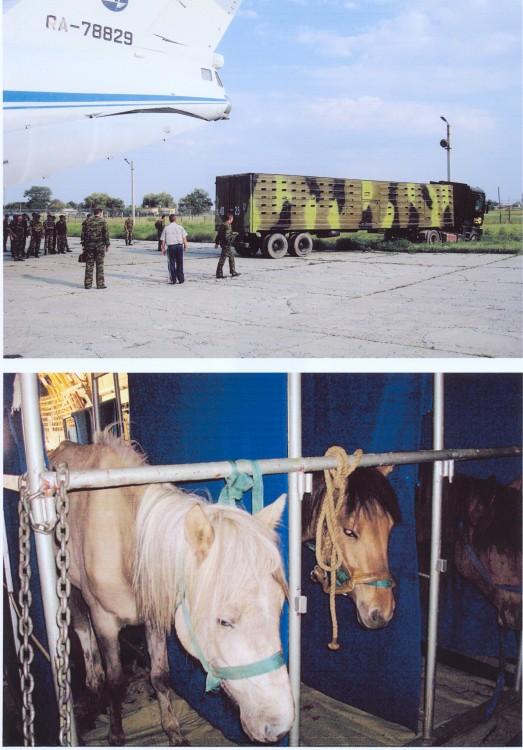 транспортировка монгольских лошадок в Моздок