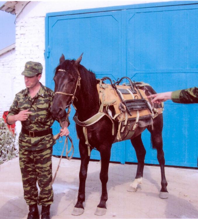 Экипировка  и снаряжение лошади