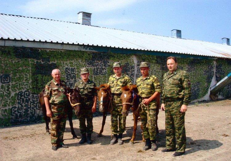 монгольские лошадки в конюшне
