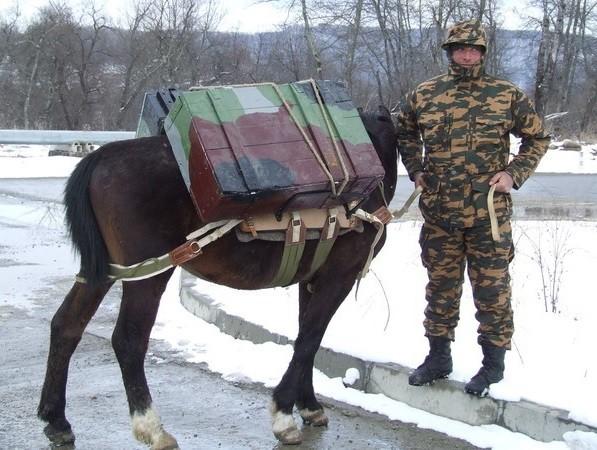 экипировка лошади и бойца-коневода