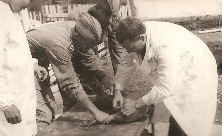 Ветеринарный хирург В.П.Ветров