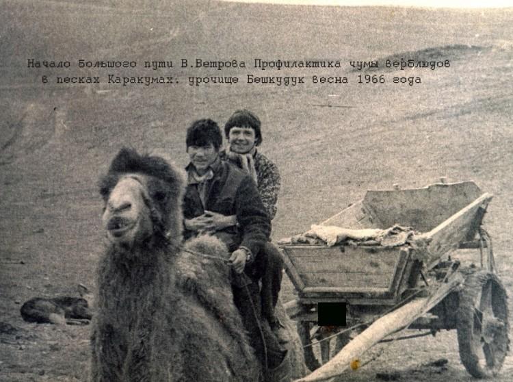 борьба с чумой верблюдов в Каракумах