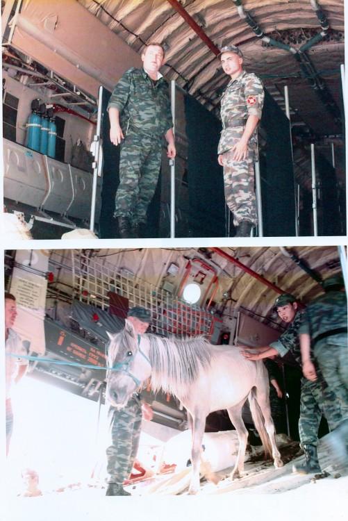 лошади на борту самолета ИЛ 76