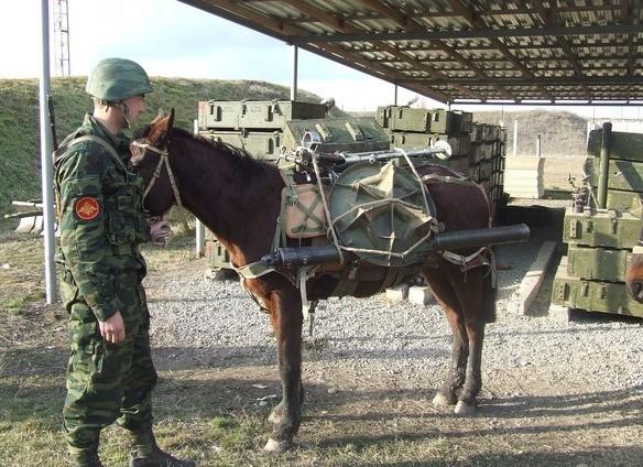 экипировка  служебной лошади с вооружениемр