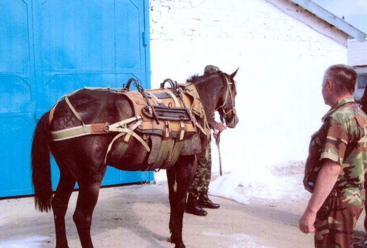 снаряжение вьючной лошади