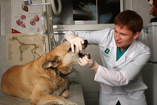военный врач кандидат ветеринарных наук офицер запаса Макаров Иван