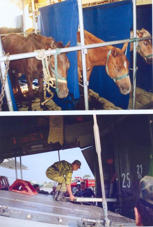 размещение лошадей в самолете