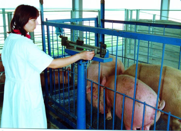 Ветеринарный врач - терапевт. врач общей практики